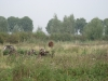 beweiding door rode geus